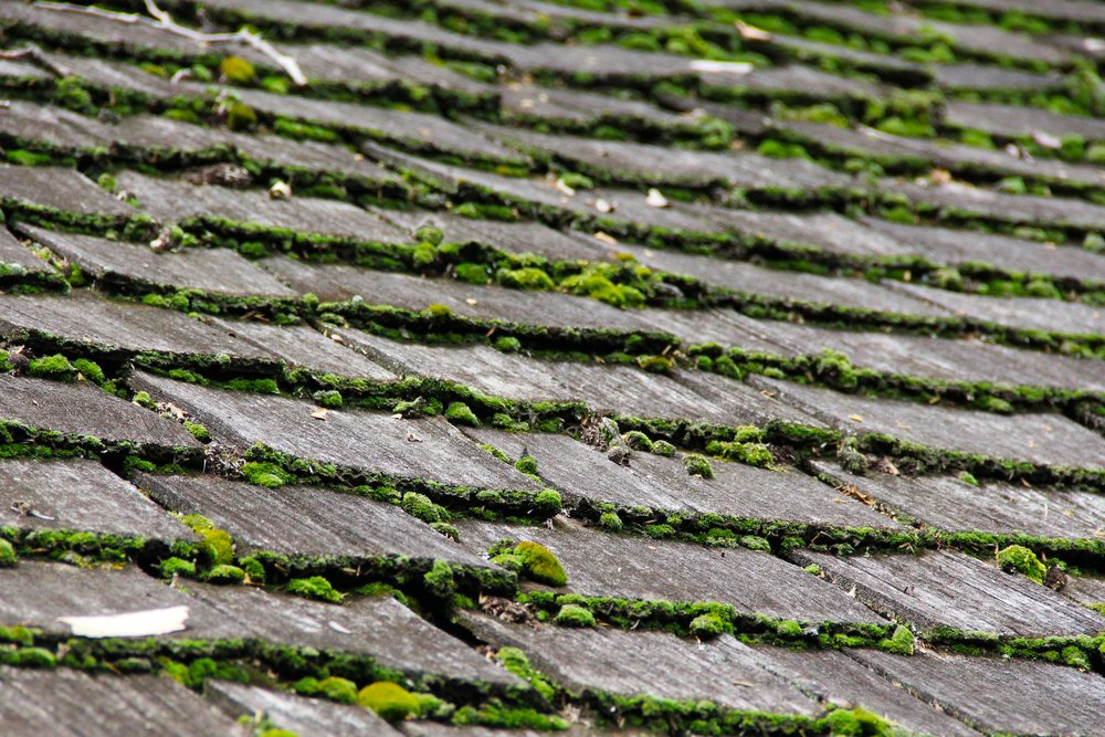 Why Is Moss Growing On My Roof And How Do I Stop It